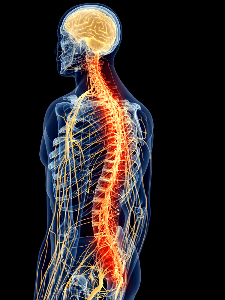 animation of brain & spine connected