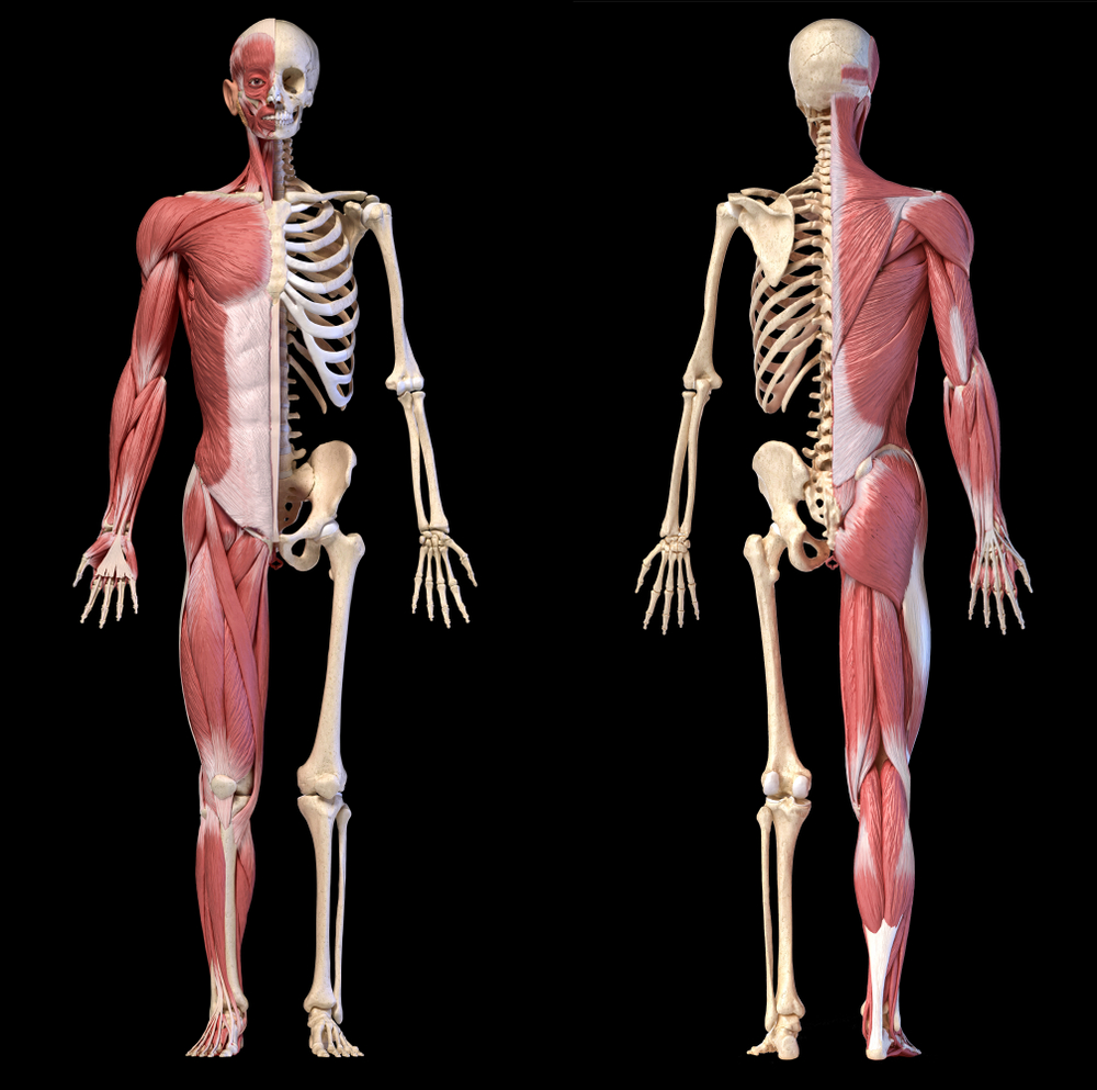 diagram of musculoskeletal disorder